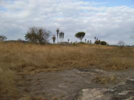 The Masvingo landscape in Zimbabwe is dominated by grassland and bush savannah