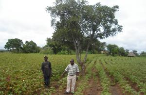 """Cotton made in Africa"" is an initiative that was started by the mail-order group Otto in 2005 to support small-scale farmers south of the Sahara. Among other things, the initiative helps cotton farmers find industrial purchases. The DEG has been involved in Cotton made in Africa from the very beginning"