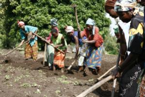 Farm women in the DR Congo