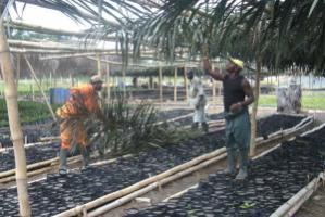 Building a shed for B-BOVID's oil palm nursery