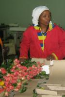 Flower exports raise rural people's incomes: farm worker in Kenya