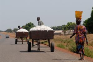 Cotton is Mali's most important export good