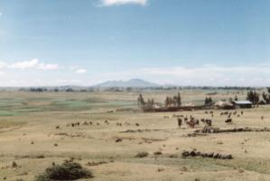 """Landraces are  well adapted to the specific conditions  of the places where they are grown."" Traditional farm land in Ethiopia"