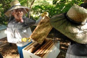 Honey is one of the many products agroforestry results in