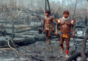 Slash and burn in Brazil: more than 15 % of the Amazon rain forest has already been  destroyed, and the rest is in danger