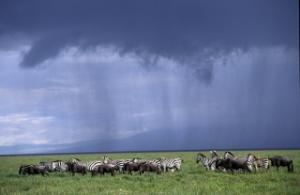 Storm clouds over Tanzania's Serengeti National Park: global public goods – such as protection of biodiversity and the climate – should be on the World Bank's agenda