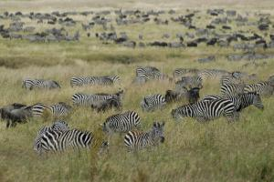 Tanzania's Ngorongoro National Park: the mere size of a nature conservation area says little about the state of its biodiversity