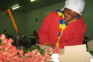 In 2006, the Kenyan media did not pay any attention to the international flower market even though the livelihoods of several hundred thousand families depend on it. Farm worker near Naivasha