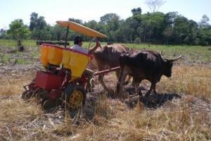 Direct seeding of maize in Paraguay