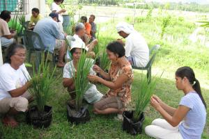 Village women can make a difference: participants in a farmer field school hosted by SEARICE in the Philippines.