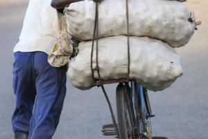 A cooperative worker transporting potatoes