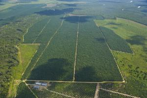 Palm oil plantations exacerbate an environmental crisis in Borneo