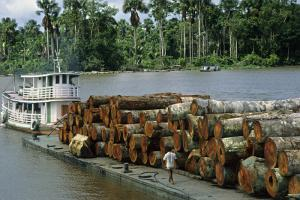 "The German term for ""sustainability"" is ""Nachhaltigkeit"" and was first used in forestry. It stands for the principle of not cutting down more trees than grow in any number of years: timber in the Amazon delta"