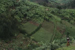 Land is a scarce resource in Africa: terraced fields in Rwanda