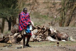 Droughts are becoming ever more hazardous: Massai herder with dead cattle in Kenya in 2006