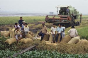 Food prices rising on world market