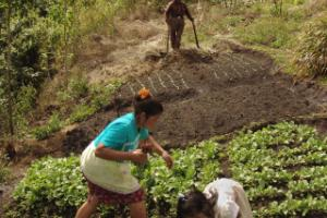 Globalisation of farming in Honduras