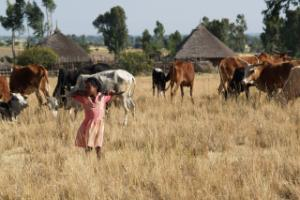 "Fighting poverty: ""Look at villages through the MDG prism"""